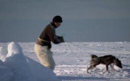 Arctic: Life in the Deep Freeze